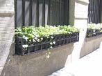 Floor Window Boxes